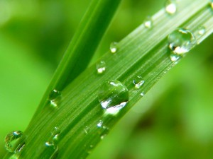 Krople wody na źdźbłach trawy